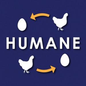 FFT-Humane